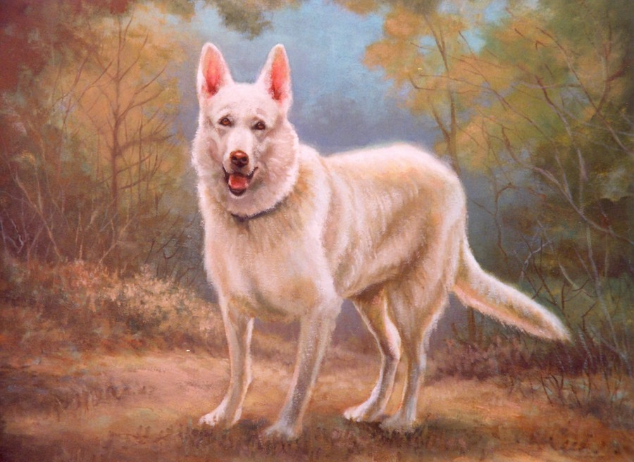 White Dog - Oil - 16 x 20 - Sold